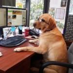 «Домашние животные на рабочем месте»: PURINA призывает компании открывать двери своих офисов для собак